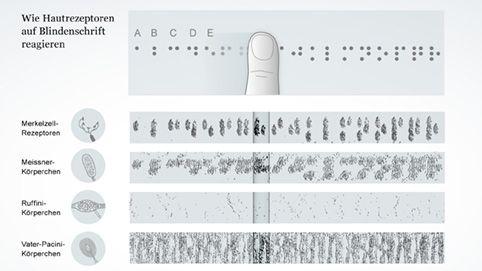 Rezeptoraktivität verschiedener Mechanorezeptoren