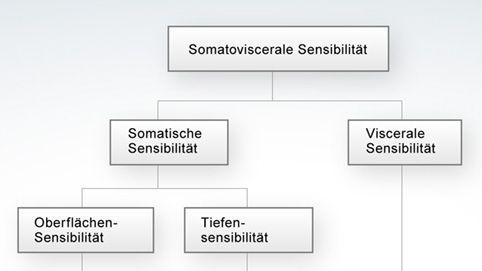 Schematischer Überblick über das somatosensorische System