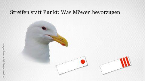 Aufmerksamkeit bei Möwen