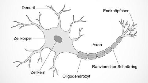 Aufbau eines Neurons