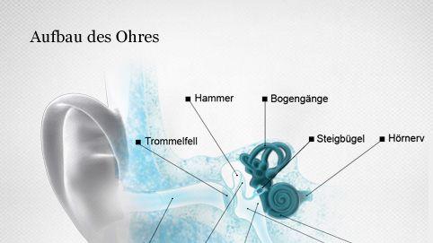 Aufbau des Ohres