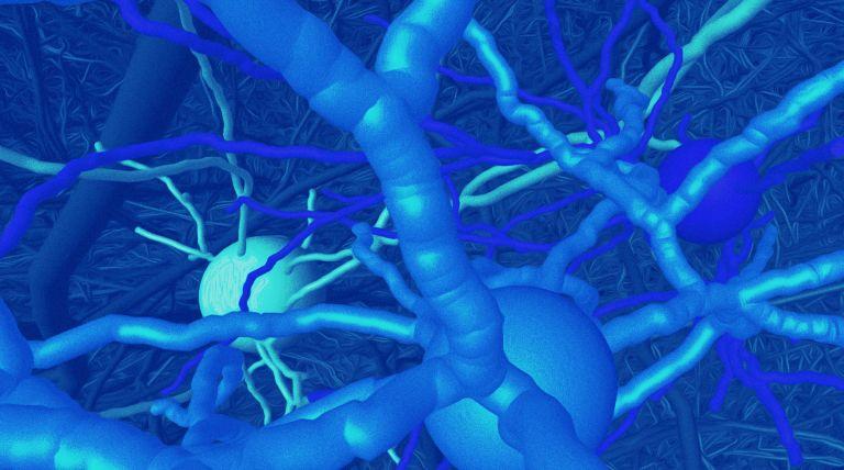 3D Rekonstruktion vernetzter Nervenzellen