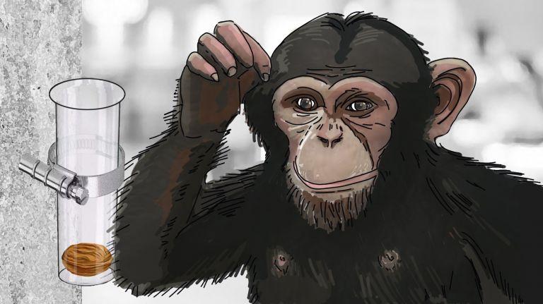 Schimpansengedanken