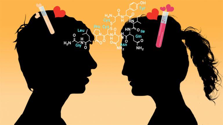 Liebe ist Biochemie