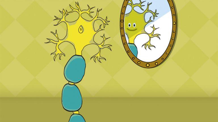 Spiegelneurone