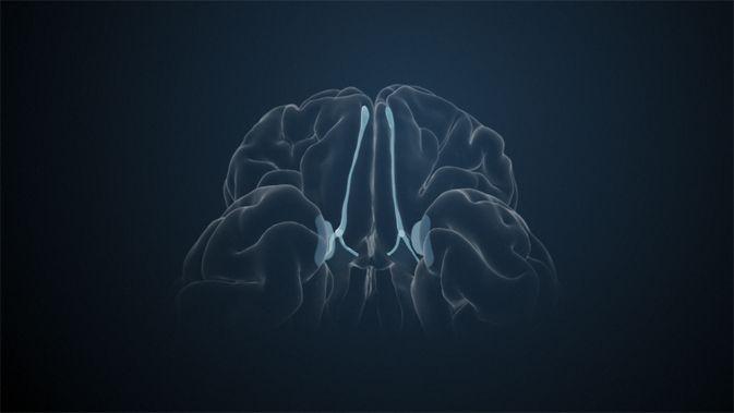 Der Paleocortex