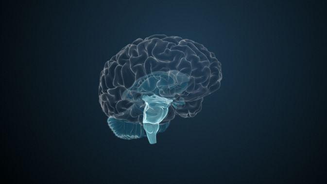 Der Hirnstamm