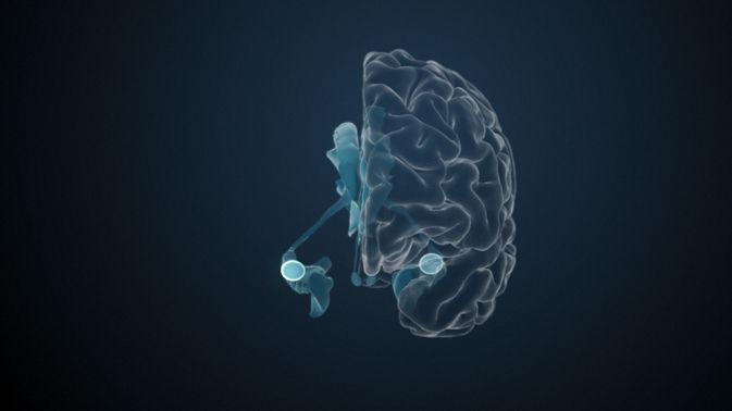 Die Amygdala