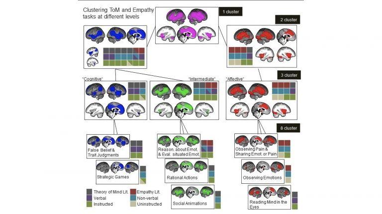 """Die sozialen Fähigkeiten """"Empathie"""" (rote Hirnareale) und """"Perspektivwechsel"""" (blaue Hirnareale) sind hierarchisch aufgebaut. Sie setzen sich aus verschiedenen einzelnen Bausteinen zusammen."""
