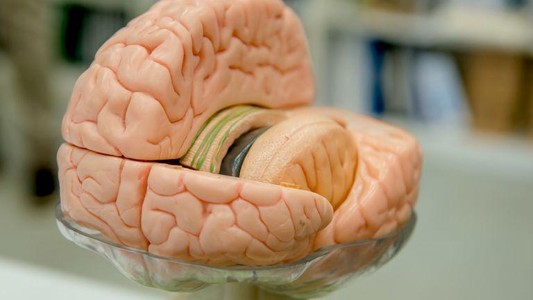 Das Gehirn von jungen Menschen arbeitet möglicherweise anders, wenn sie ein genetisches Risiko für Alzheimer haben.