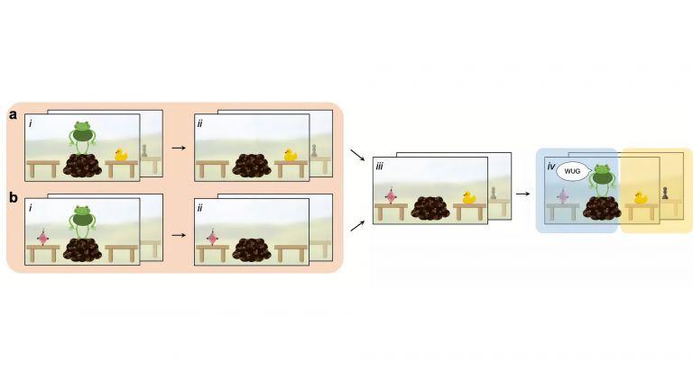 Diese Abbildung zeigt die experimentellen Stimuli, die verwendet wurden, um die Sensibilität der Kinder für verschiedene Informationsquellen und deren Integration zu testen.