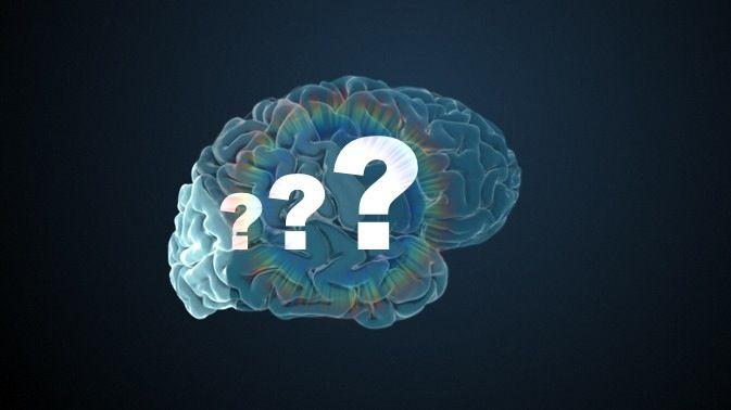 Gehirn und Schule – Fragen an Martin Korte